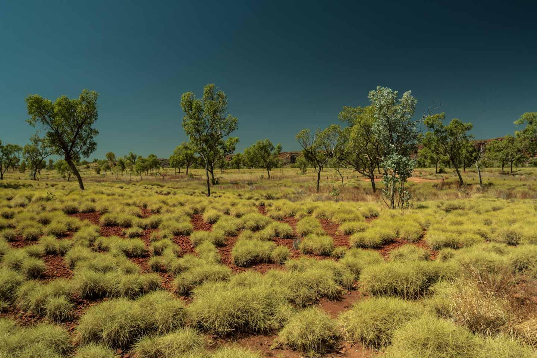 4WD track into the Purnululu National Park Bungel Bungels Western Australia