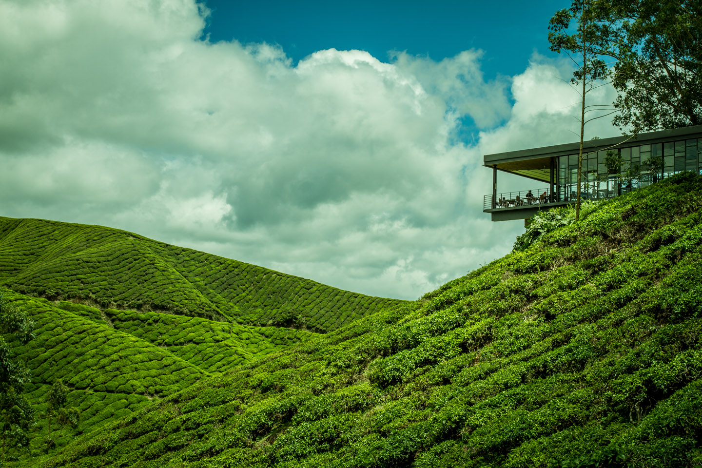 BOH Best of Highlands Tea plantation and factory Cameron Highlands Malaysia