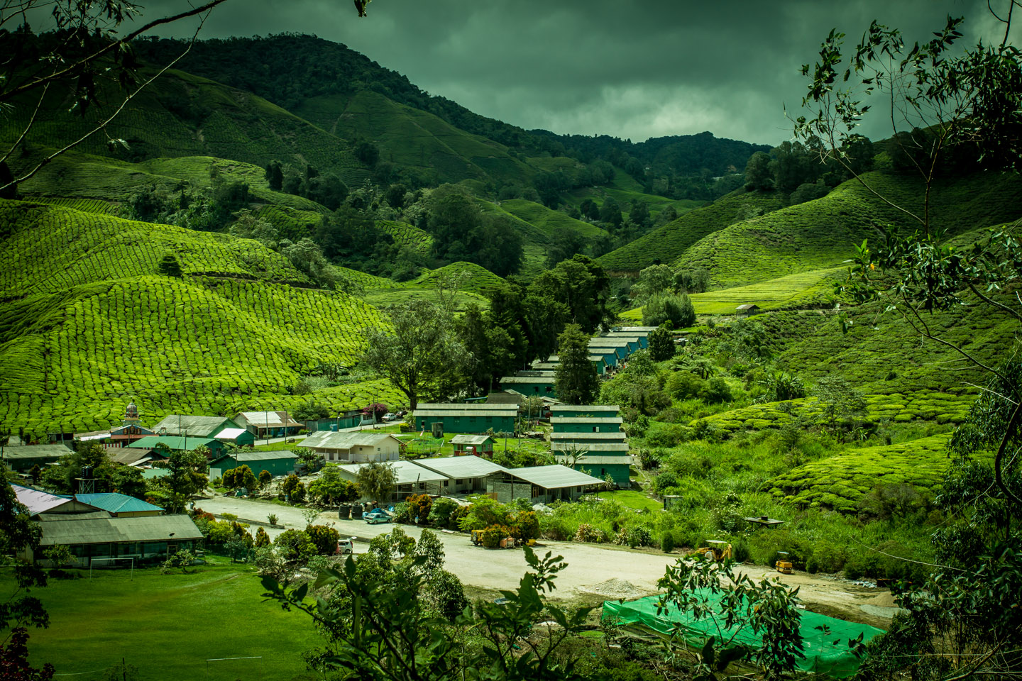 BOH Best of Highlands Tea village Cameron Highlands Malaysia