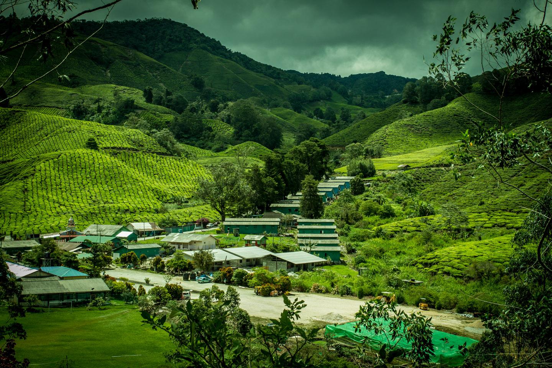 BOH Best of Highlands Tea village Cameron Highlands Malaysia