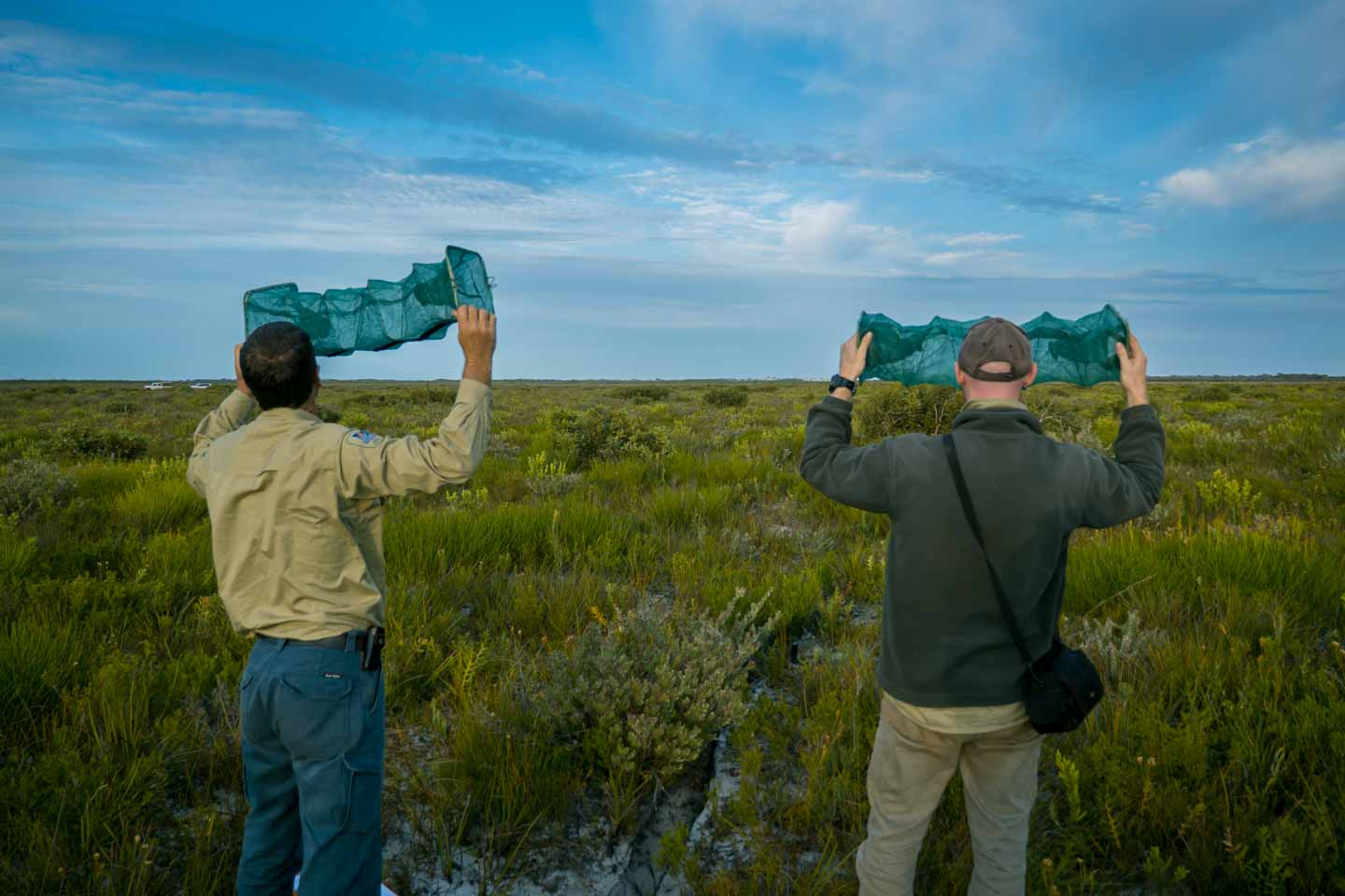 Checking funnel traps in Cape Arid National Park with Parks and Wildlife Western Australia