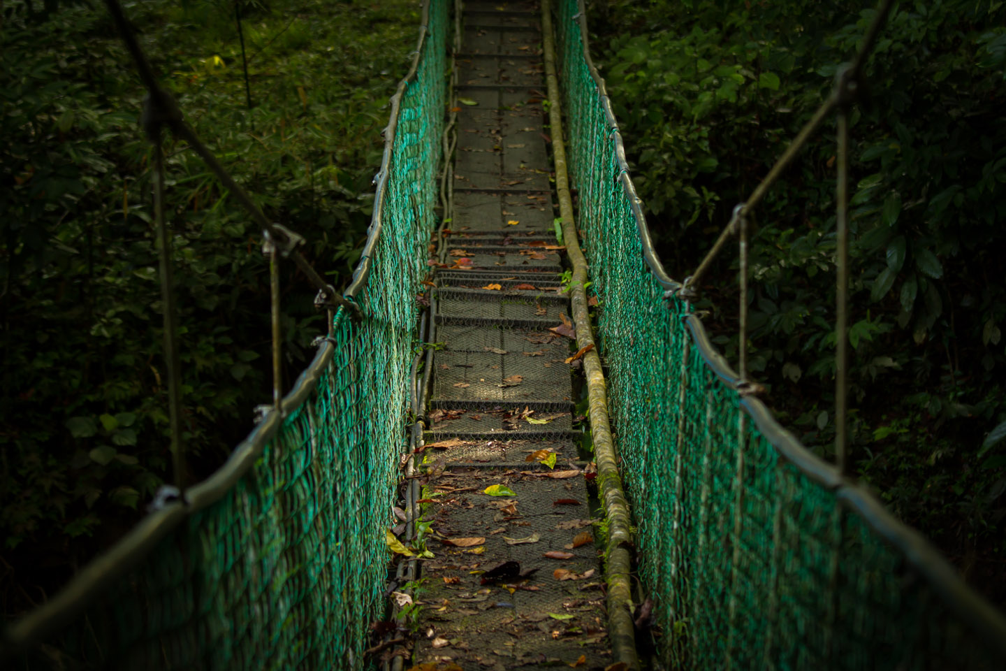 Small Suspension bridge Danum Valley Field Center Conservation Area Sabah Borneo Malaysia