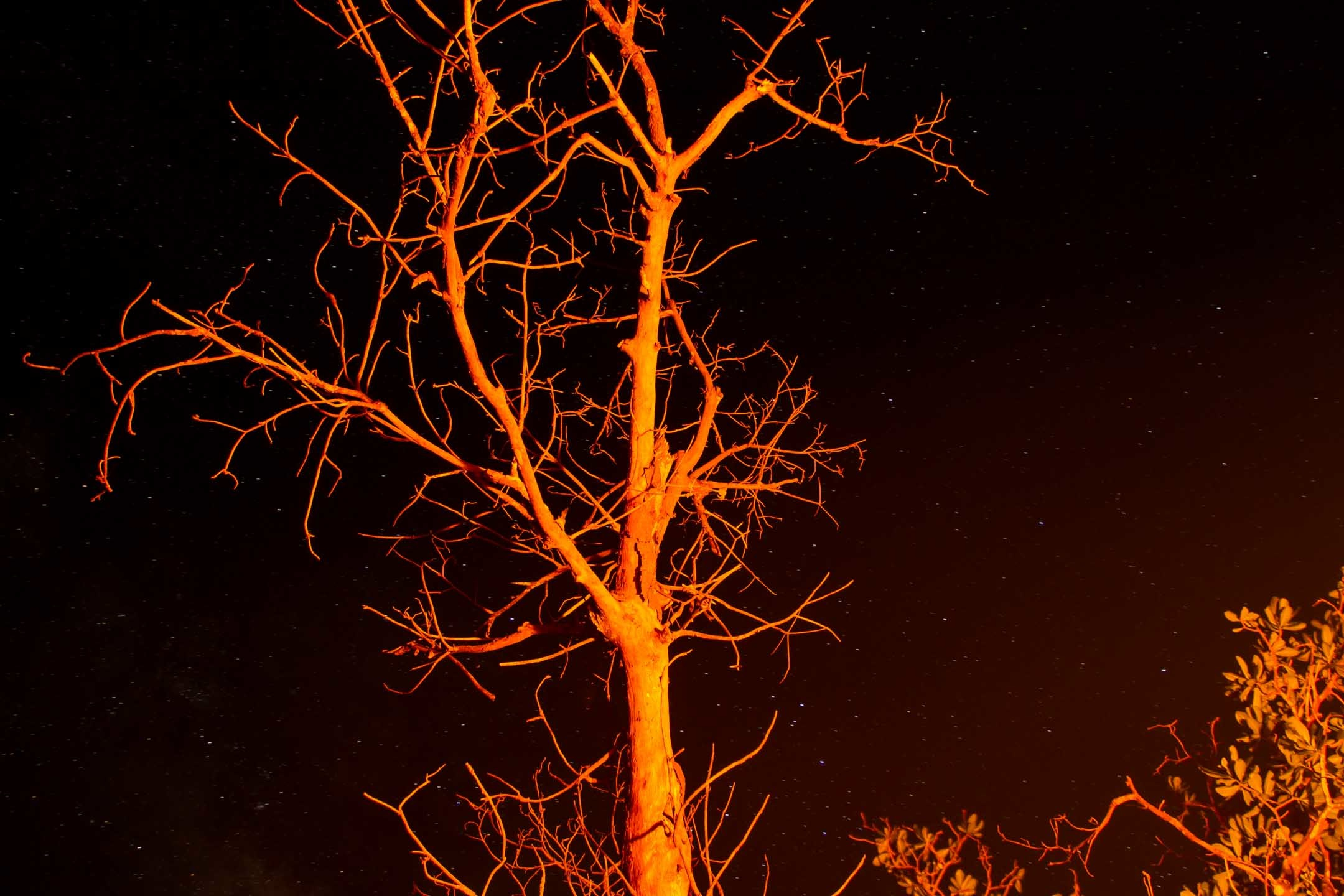 Tree by night with bonefire at Nusa Kambangan Java Indonesia