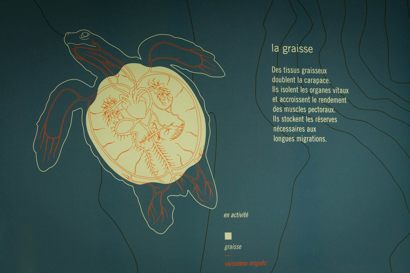 Kelonia Turtle Sanctuary information graphic Réunion Reunion / Schildkröten  Aquarium Grafik