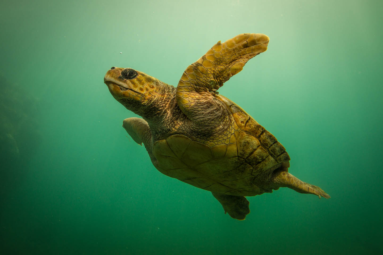 Kelonia Turtle Sanctuary Farm Réunion Reunion/ Schildkröten Farm Zucht