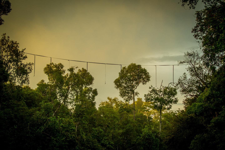 Animal monkey bridge for Orang Utan at Kinabatangan River Sabah Borneo Malaysia