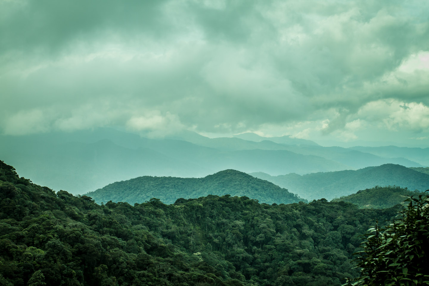 Look and view over the Mossy Forest Mount Gunung Batu Brinchang Malaysia