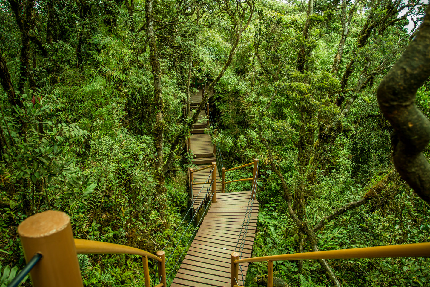 Stairway with many stairs in the Mossy Forest Mount Gunung Batu Brinchang