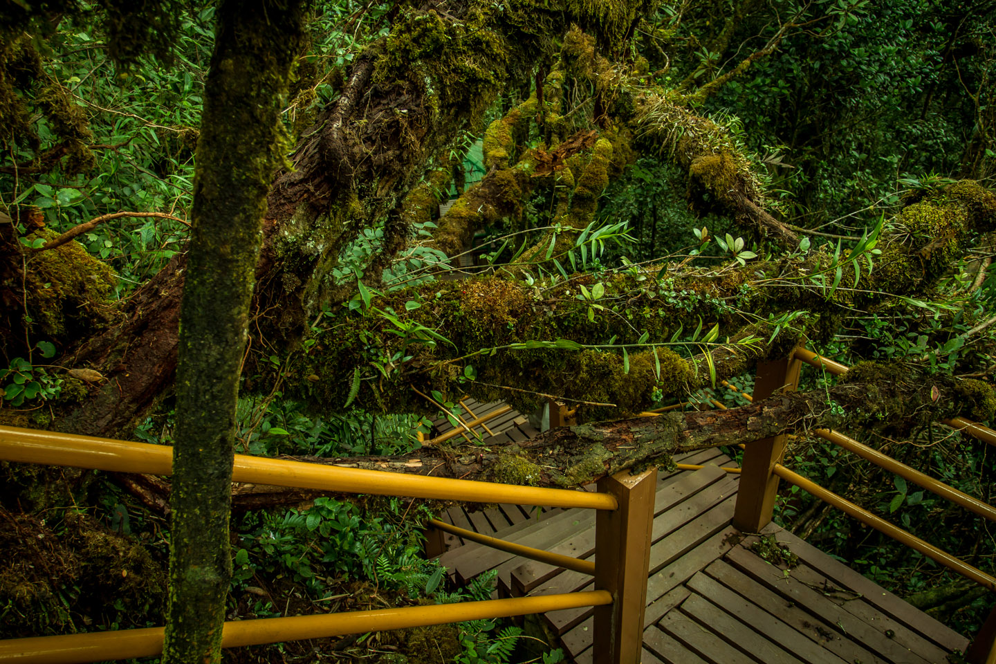 Nature and wildlife in Mossy Forest Mount Gunung Batu Brinchang
