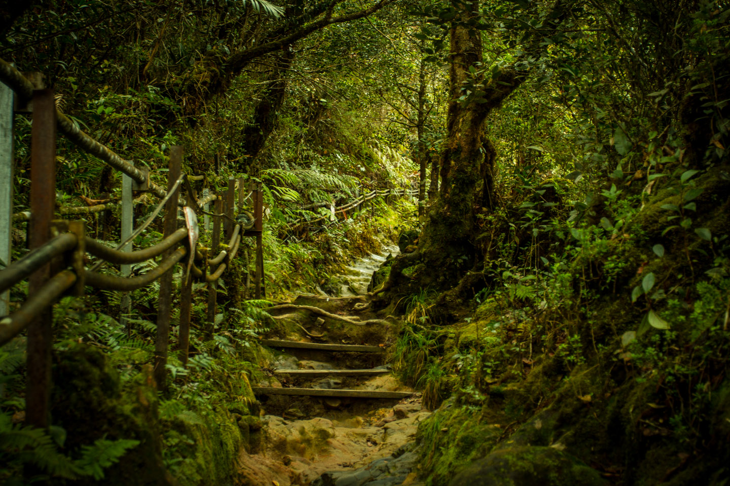 Steep track stairs to the top of Mount Kinabalu Sabah Borneo Malaysia