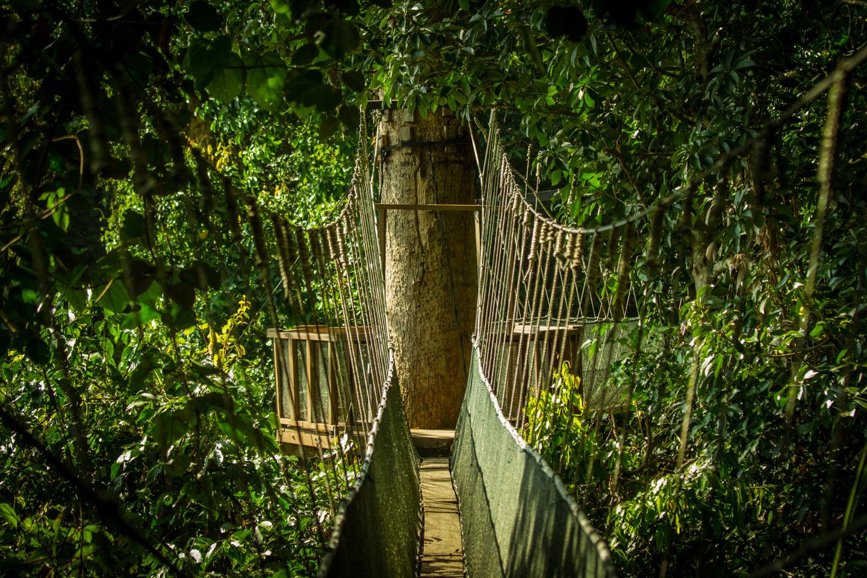 Poring Hot Spring Resort canopy walk Sabah Borneo Malaysia