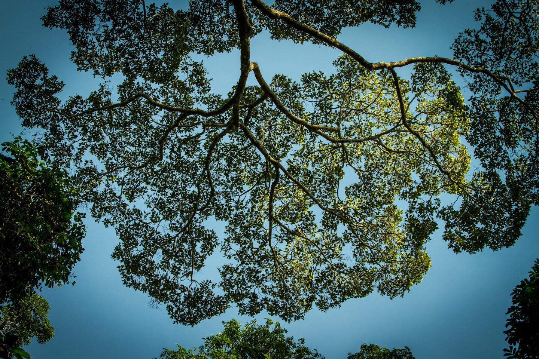 Forest jungle Mount Kinabalu Sabah Borneo Malaysia