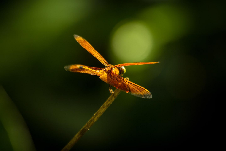 Dragonfly canopy walk Poring Hot Spring Resort Sabah Borneo Malaysia