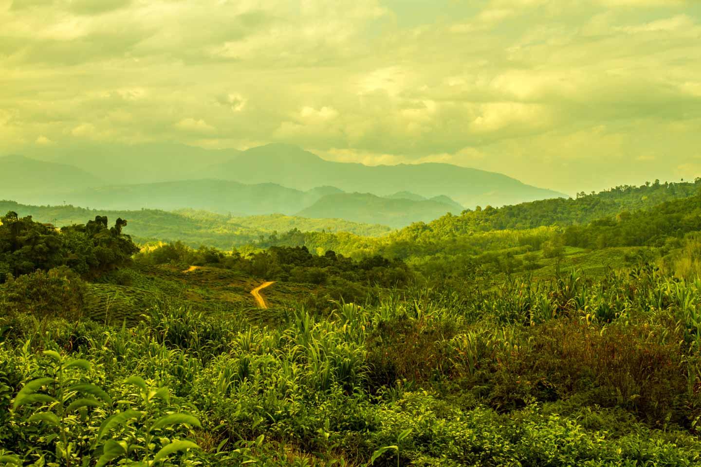 Sabah Tea Garden Plantation at the foot of Mount Kinabalu in Borneo Malaysia