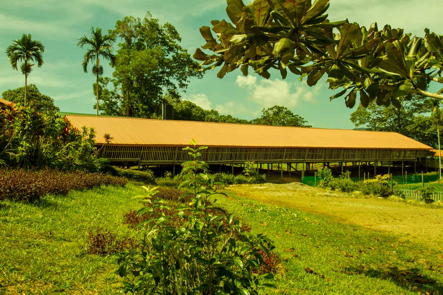 Traditional long house at the Sabah Tea Garden Plantation in Borneo Malaysia