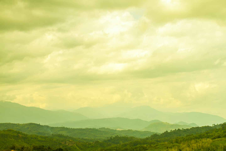 Overlooking Sabah Tea Garden Plantation with Mount Kinabalu in Borneo Malaysia