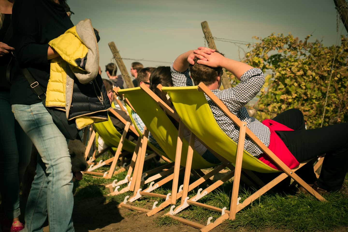 Sun bathing in the vineyards of Oppenheim during the Schlemmerwanderung 2015