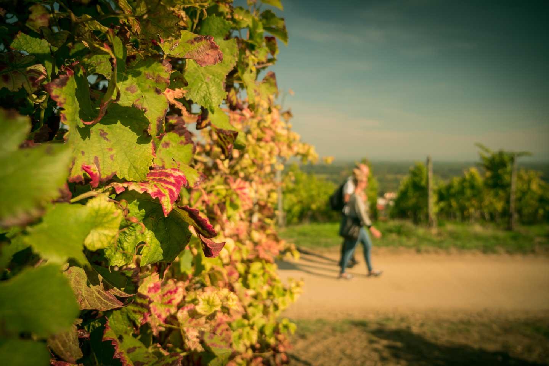 Gourmet hike / Schlemmerwanderung in Oppenheim 2015