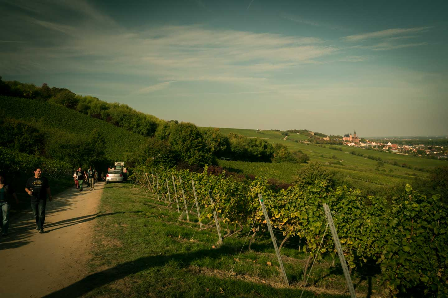 Walkint the Gourmand Hike track in the vineyards / Schlemmerwanderung in Oppenheim 2015