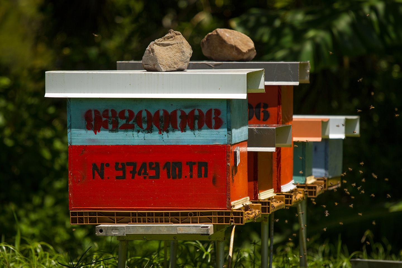 Bee honey Imker beekeeper Honig Reunion island